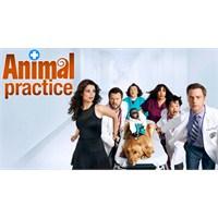 """Nbc'den Beklenen Karar: """"Animal Practice"""" İptal"""