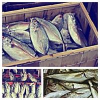 Balık...