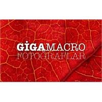 Gigapixel Macro Fotoğraflar