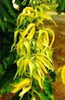 Bitki Toplama Kuralları
