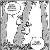 En Az Bir Koala Kadar Miskinim Bugün