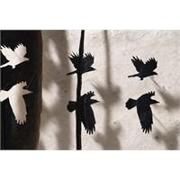 Kuş Tüyünden Kuş Manzaraları Yapmak