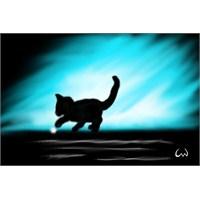 Işığı Yakalamaya Çalışan Kediler Gibiyiz