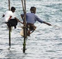 Hiç Böyle Balık Avladınız Mı?-resim