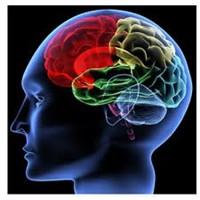 Beyninizin Küçülmesi Sizi Daha Akıllı Yapıyor