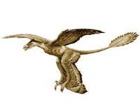 Dört Kanatlı Tüylü Dinozor