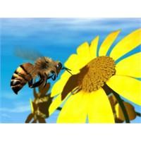 Arı Zehrinin Faydaları.