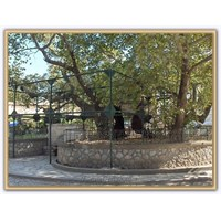 Hipokrat Ağacı ( Kos )