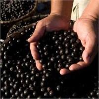Acai Berry Hapları İşe Yarıyor Mu?