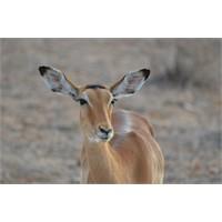 Jambo-Kenya