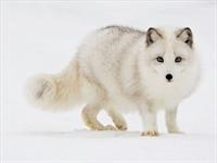 National Geographic Arşivinden Bazı Güzel Resimler