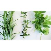 Hangi Bitki Hangi Hastalığa İyi Gelir?