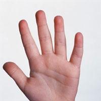 El Parmakları Kişiliği Yansıtıyor