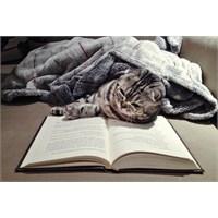 Okumak Sizi Daha İyi Bir İnsan Yapar Mı?