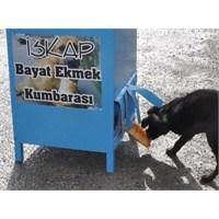 Sokak Köpeklerine Bayat Ekmek Kumbarası Girişimi