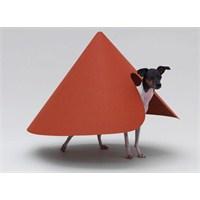 Köpek Dostunuza Özel Mimari Çözümler