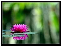 Çiçek Bakımı Nasıl Yapılır?