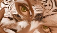 Photoshop İle Kendi Kedi Kızımızı Yapalım