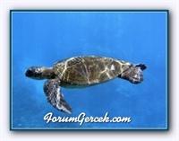 Su Kaplumbağası Hakkında Bilgiler