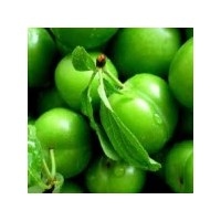 Yeşil Ve Kuru Eriğin Faydaları