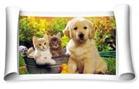 Kedi Ve Köpek Kısırlaştırması
