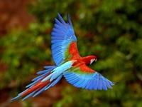 Renkli Renkli Papağan Resimleri