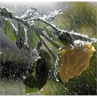 Yağmur herkese yağar