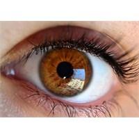 Kahverengi Gözlüler İnsanlara Güven Veriyor