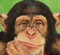 Maymunlara Rakip