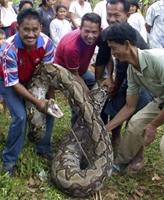 Dünyanın En Uzun Yılanı