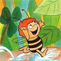 Küçük Arı Maya Bildiriyor …