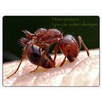 Sal Oluşturarak Sağ Kalan Ateş Karıncaları
