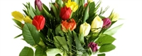 Salon Bitkilerine Yaz Bakım Tüyoları!