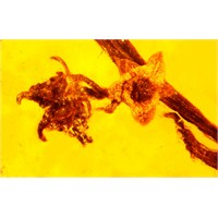 100 Milyon Yıllık Amberde İlk Bitki Üremesi