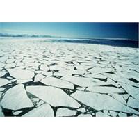 Bering Denizi