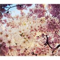 Bahar Renkleri