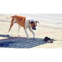 Köpekten Kedi İçin İnsanlığa Ders