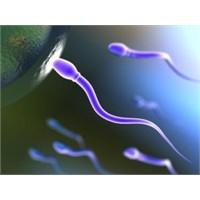 Şeker, Sperm, Yumurta !..