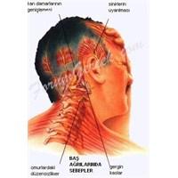 Migren Belirtileri Ve Semptomlar