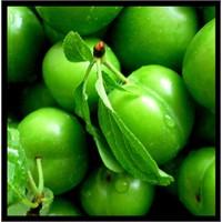 Yeşil Erik Faydaları Nelerdir?