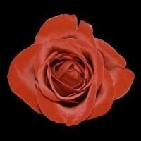 Çiçeklerin En Güzeli İle Güzellik Sırları!