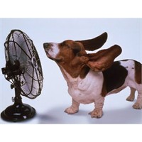 Evcil Hayvanlarınızı Yaz Sıcaklarından Korumak