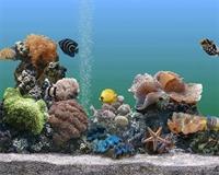Akvaryım Balıklarının Bakımı Ve Sağlığı