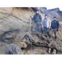 Rusya'da 30.000 Yıllık Tüylü Mamut Bulundu