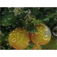 Dışarıda Yağmur İçeride Portakal Kokusu…