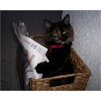 Kitap Okuyan Kedi, Okumayan İnsanları Utandırıyor!