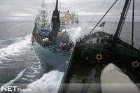 Antartika'da Balinalar İçin Savaş