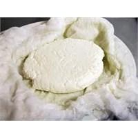 Evde Peynir Yapımı!