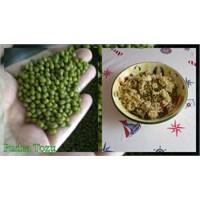 Maş Fasulyeli Kırpıklı Salata Tarifi