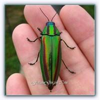 Böceklerle Kaplanmış Tavan Dekorasyonu
